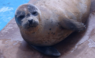 Skegness Natureland Seal Sanctuary